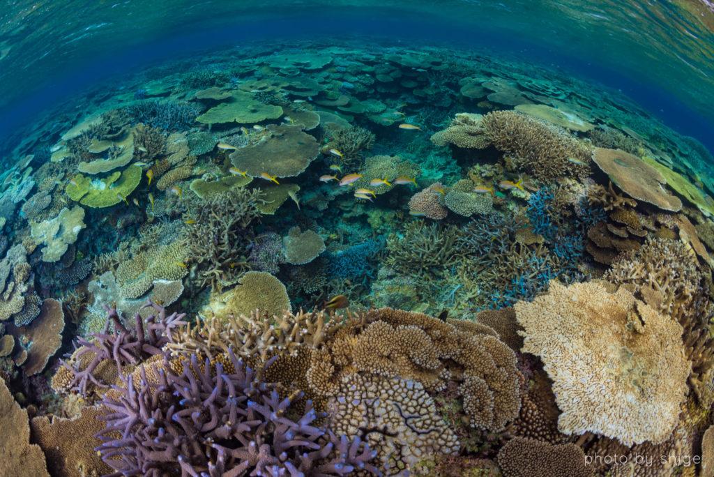 伊平屋島サンゴ