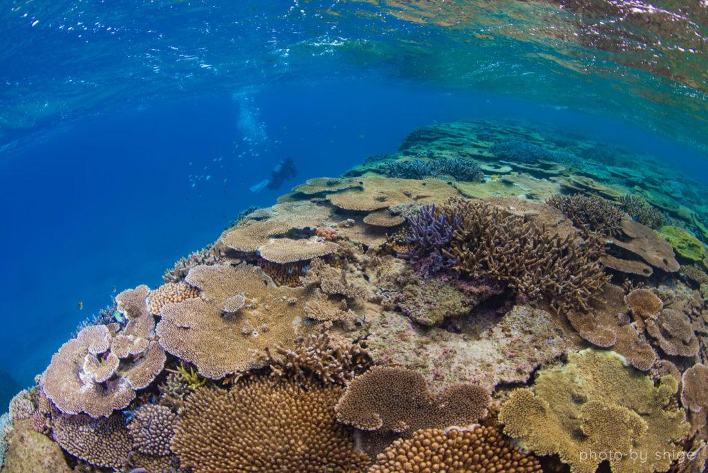 伊平屋島ダイビングの写真