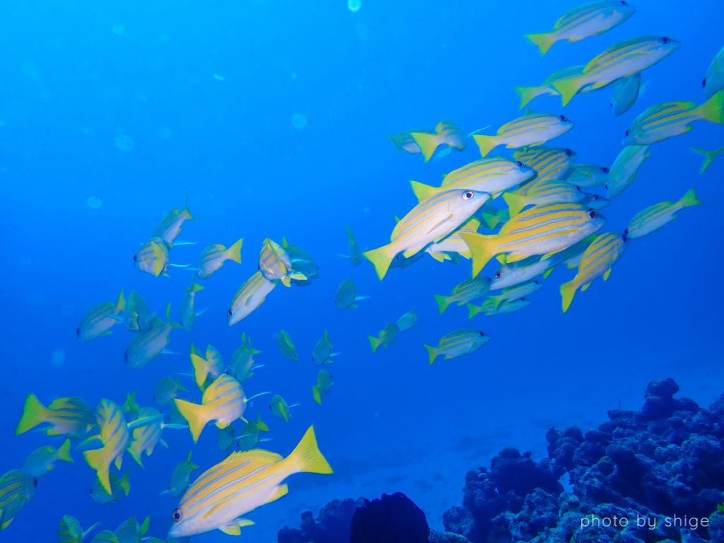 水納島ワイドの写真