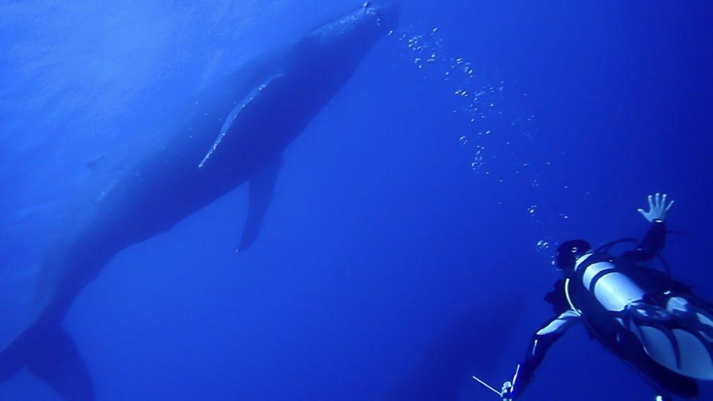 ザトウクジラとの2ショット