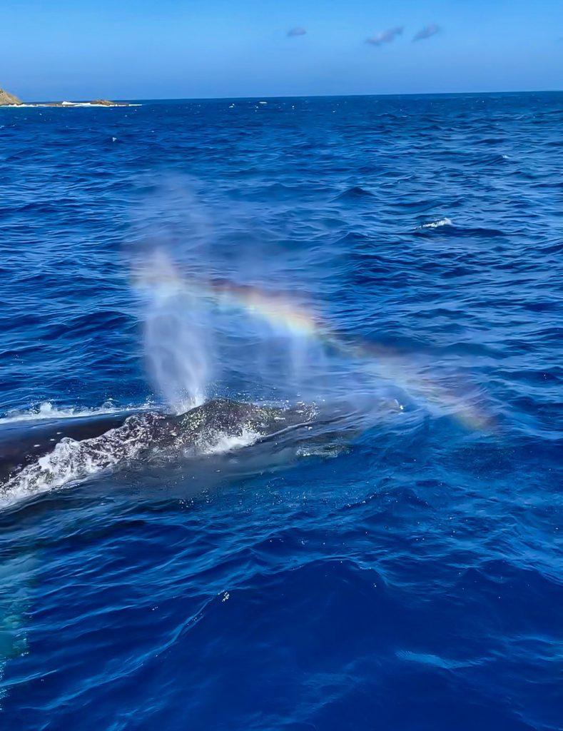iPhoneで撮ったクジラのブロー
