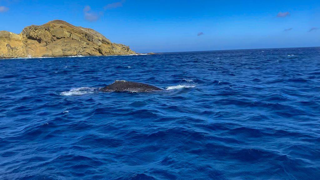 iPhoneで撮ったザトウクジラ