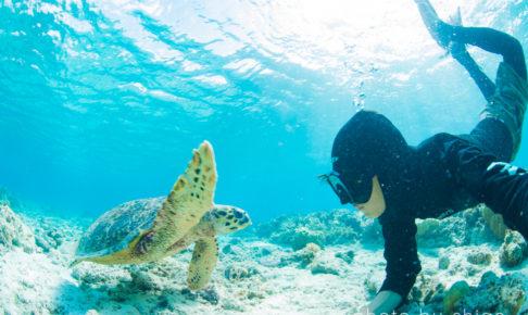 ウミガメとの対面