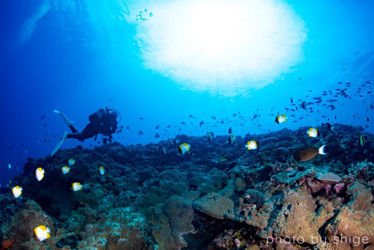 与論島ダイビングのわかりやすい魅力