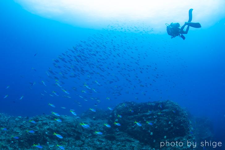 阿嘉島のドリフトダイビング