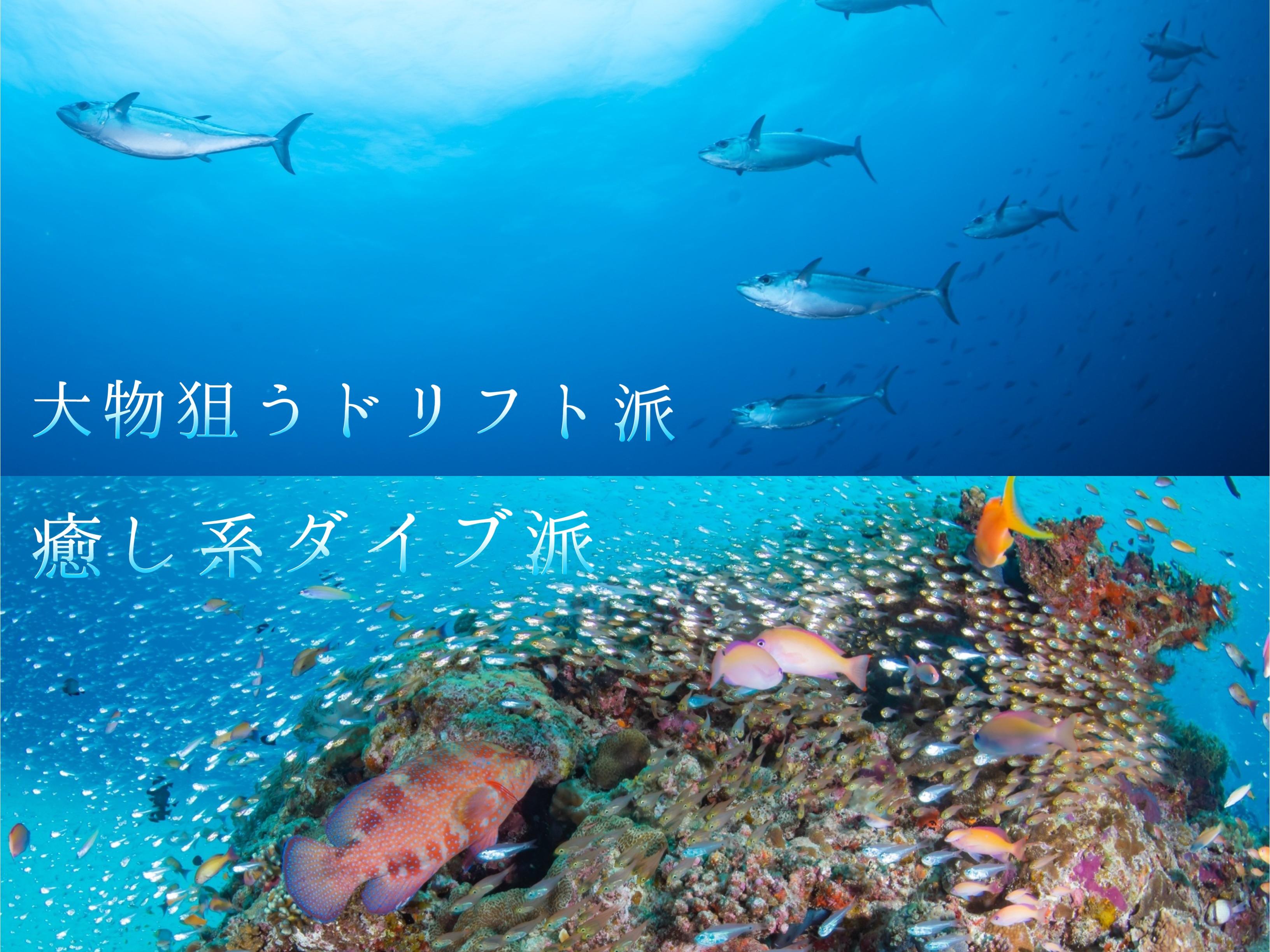 阿嘉島のダイビング