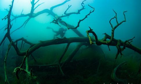 本栖湖のダイビング風景
